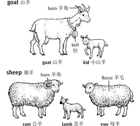 (awi,纯羊毛标志介绍)澳大利亚羊毛业及纯羊毛标志