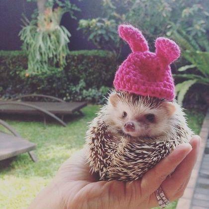 毛线兔子帽