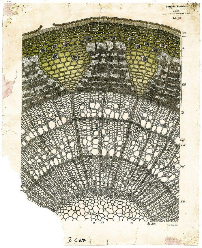 像棒针蕾丝的植物细胞