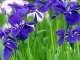 紫鸢-201507开衫