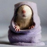 宠物毛衣 10款可爱的宠物毛衣编织图片