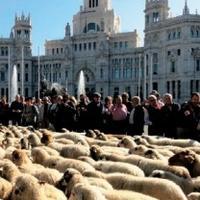 世界手工编织之马德里 从8只羊开始的纺织业