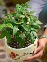 取材做法超简单的DIY小清新盆栽