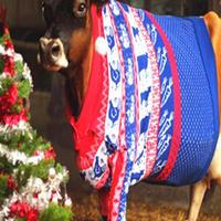 """英国奶牛""""格洛丽""""穿圣诞毛衣为慈善助力"""