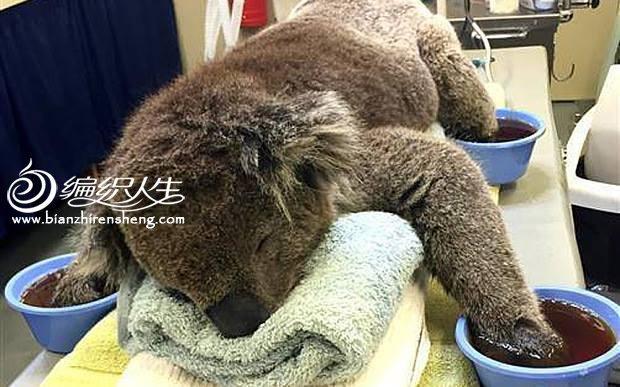 为澳洲森林大火中受伤的考拉制作手套-编织人生