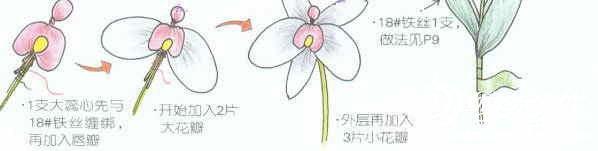 丝网花之水仙花和蝴蝶兰的制作图解
