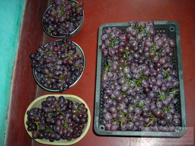 家庭自酿葡萄酒-编织人生