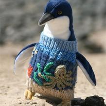 为了生存,企鹅也穿上了毛衣!这是为什么呢。。。