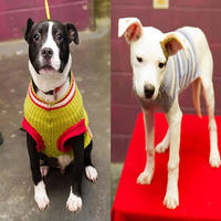你知道吗?一件旧毛衣可以改善流浪狗的生活