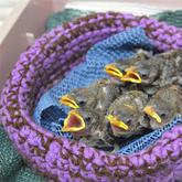 来自加拿大的公益活动 用毛线编织为野生小动物筑巢