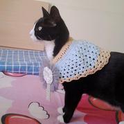 猫咪的钩针小清新披肩 手工编织宠物服饰