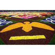 60万朵娇艳编织壮丽花毯