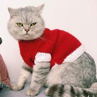 天冷了给爱宠织件毛衣 棒针猫咪毛衣