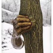 Fendi 办了个只有树的展!