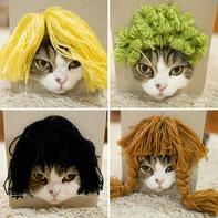 网红猫尝试不同的毛线假发帽 萌态受到千人关注