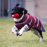 手工編織狗狗毛衣還有這種很有愛的用途