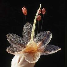 对自然世界的好奇让她用尼龙丝编织出植物朦胧美