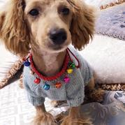 一天完工的简单宠物衣 从领口开始织的棒针狗狗毛衣
