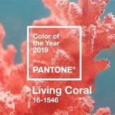 """你那里冷嗎?來看溫暖活潑而柔美的2019年度色""""活珊瑚橘"""""""