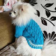 小博美棒针麻花毛衣的织法 DIY爱宠毛衣