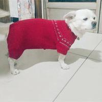 爱宠毛衣编织之京巴狗狗的棒针四脚毛衣