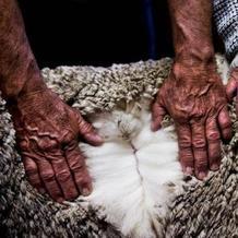 AWI CEO为你讲述美丽诺羊毛的故事